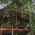 Tree House #3
