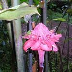 Rose porcelaine du gîte