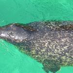 Seals greet you at the front door