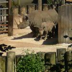 Baby Zuri the Rhino (August 2007)