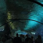 Inside the aquarium tunnel.