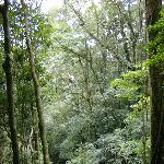 Tarzan Swing - San Lorenzo Canopy Tour