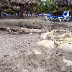 voyez le piètre état de la plage, désolant