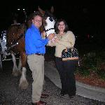 My Husband and I with Buddy The Clydesdale