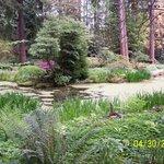 Woodland pond in the Rhododendron Species Garden