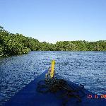 Mangrove de l'estuaire de Playa Grande