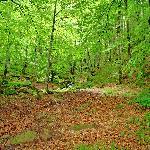 la selva de Irati