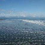 The Iguana's Beach