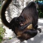Croco Cun Zoo
