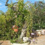 And a twisty tree!