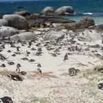 peguins on the beach