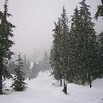 If it snows too much - try X country at the excellent new Olympic facility 20 mins drive