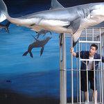 Natal Shark Board