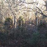 Cottage Suite - Winter Wooded View