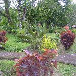 Jardin magnifique et bien entretenu !