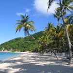 Deadman's Beach Crooked Palm