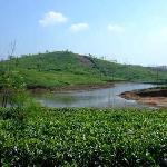 Teeanbau in Vagamon