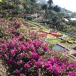 the botanical gardens at monte