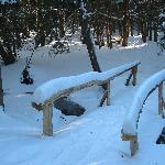 Part of the snow shoeing trail