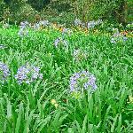 Flowers at Rondo Retreat Center