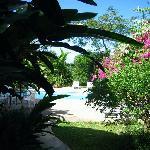 Garden at Blue House