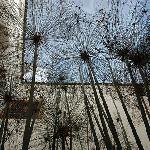 A l'ombre des papyrus, dans le patio.