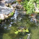 Swamis Garden
