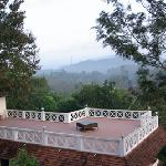 treetop roof