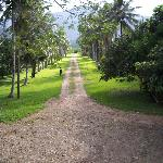 the palm- lined road to the lodge