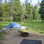 Foto de Jenny Lake Campground