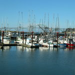 Fishing fleet at Newport, Oregon