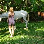 horses that roam the beach/yard