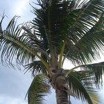 Lecture sous les palmiers