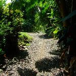 the pathway leading to the bar/dining room