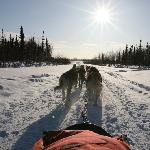 Dog Sledding with Max in Winter Wonderland