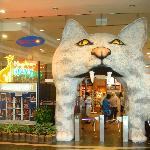 Photo de Cat Museum
