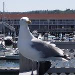 Seagull on Fisherman's Wharf balcony