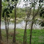 Duck Pond by Kabins 1-4