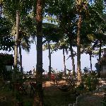 The garden at Bamboo Village