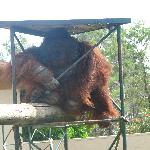 Orangutan - he was amazng!!