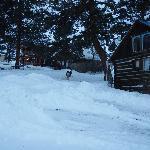 Photo de Sagewood Cabins