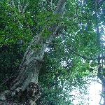 Wasgomuwa NationalPark
