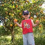 picking oranges at casa de horta
