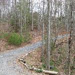 Pine Cabin Drive and Nearest Cabin
