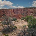 desert flora at the canyon edge