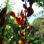 Isla Verde flowers