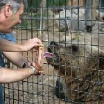 Canberra Zoo & Aquarium - bear licking honey and peanut paste - a touching experience
