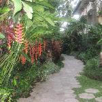 the garden walk-ways