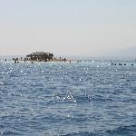 Paradise Island 6