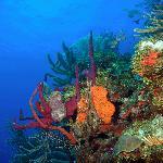 Great reef walls